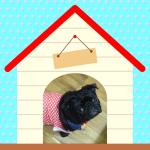 我が家のパグ犬がトイレシートを破る!対策として買った アイリスオーヤマ・シーツぴたっとトレーが超優秀。