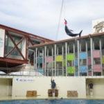 『伊豆三津シーパラダイス』水族館行ってきた体験レポ!割引クーポン情報もあり。