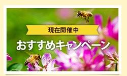 山田養蜂場キャンペーン