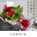 noemie(ノエミ)クーポン